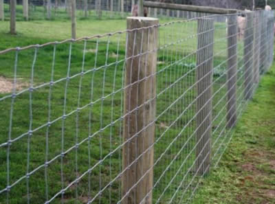 Low Carbon Field Fence Galvanized And Pvc Coated