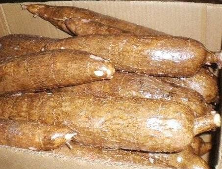 Low Price Whole Cassava Root