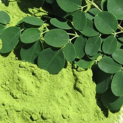 Moringa Oleifera Leaves Powder And Seeds