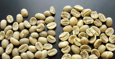 Most Popular Green Coffee Bean Extract From Professional Manufacturer