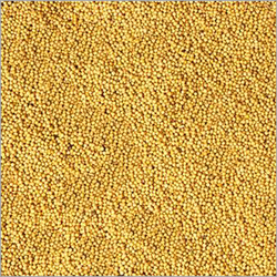 Mustard Seeds Is Commonly Used In Almost All Types Of Indian Cooking We Are Offering Best Quality Ye