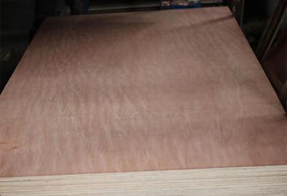 Nature Veneer 18mm Bintangor Plywood
