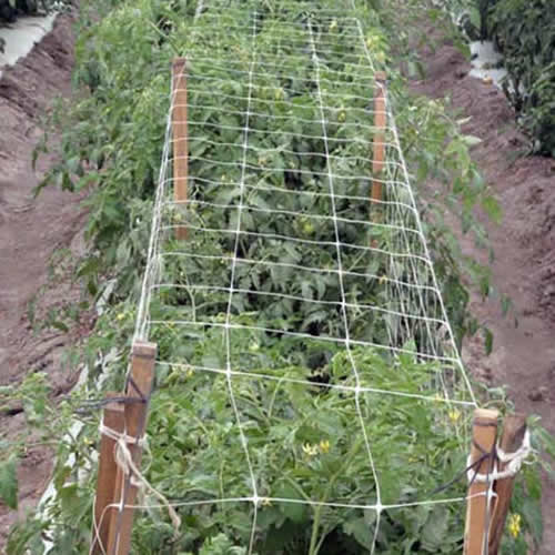 Nylon Trellis Netting Allows For A Productive Garden