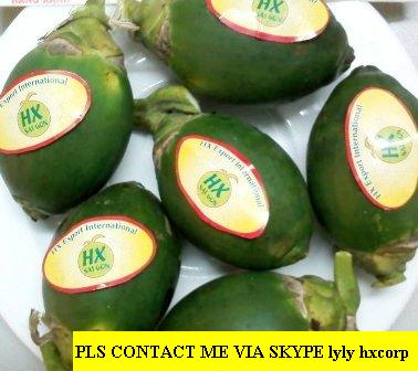 Offer Fresh Betel Nuts From Viet Nam