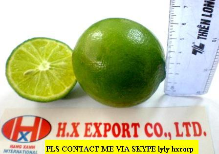 Offer Lime With Seed From Vietnam