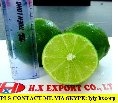 Offer Seedless Lime From Viet Nam
