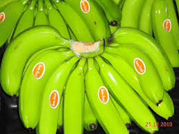 Offer To Sell Fresh Cavendish Banana
