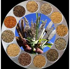 Offer To Sell Millets