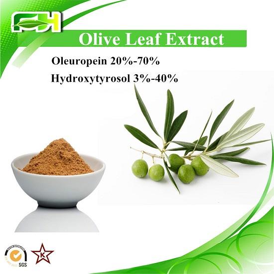 Olive Leaf Extract Polyphenol Oleuropein Hydroxytyrosol