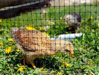 Oriented Plastic Poultry Netting Keep Predator Out