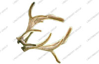 Pilose Deer Horn Extract