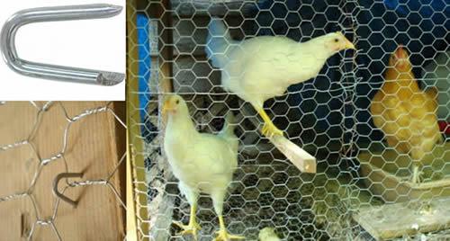 Poultry Staples 3 4 Quot 13 Ga Hot Galvanized Net Staple