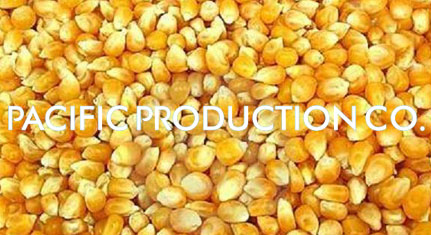 Provide Yellow Corn With Good Price