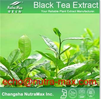 Pueraria Kudzu Root Extract 40 Isoflavnis