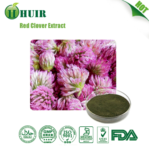 Red Clover Extract Isoflavone 8 20 40