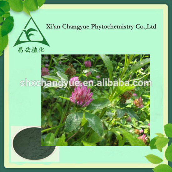 Red Clover Extract Powder To Regulate The Body Symptoms