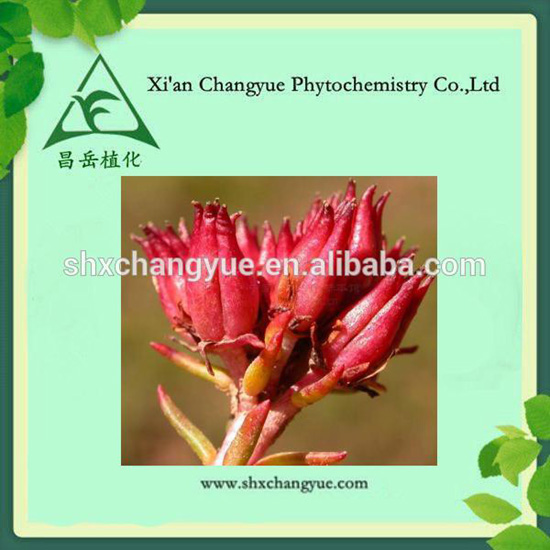 Rhodiola Rosea Extract Powder Glucoside