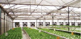Sell Horticultural Net Indoor Screen Viewpoint