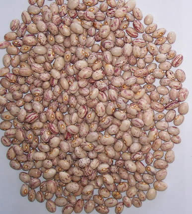Sell Light Speckled Kidney Beans Round Shape