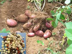 Sell N P K Fertilizer Organic