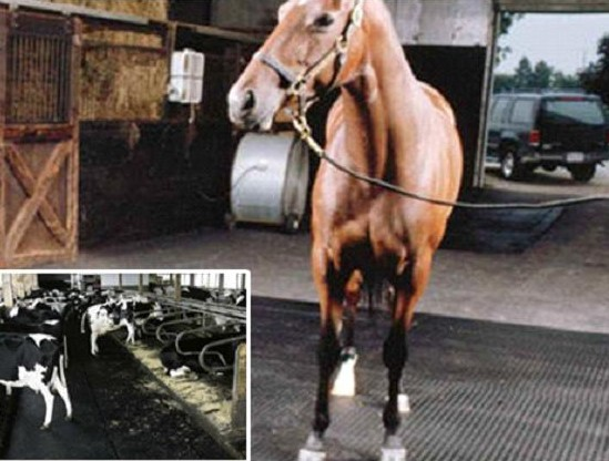 Sell Stable Rubber Mat