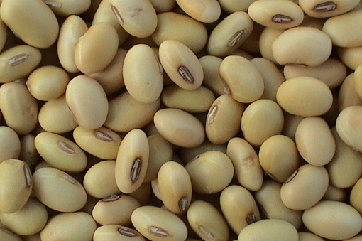 Soybeans Grade A Raw
