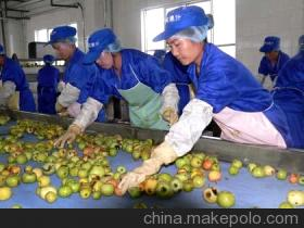 Supply Jump Pgzl Apple Juice Production Line