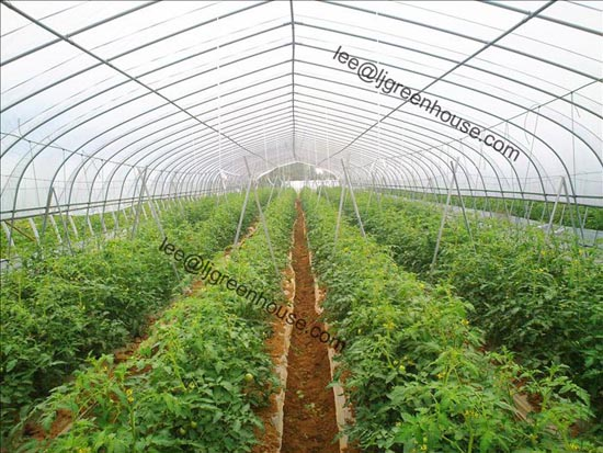 Tomato Greenhouse For Growing