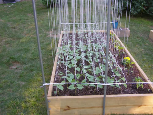 Tomato Trellis Gives You Four Benefits To Your Plants