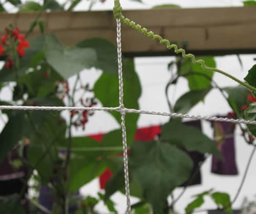 Trellis Netting Helps Increase Yields By Optimizing Space