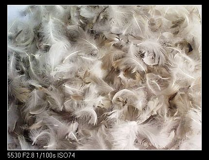 Washed Grey Goose Feather