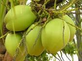 We Add The Value Of Our Services To A Large Range Items Including Coconut