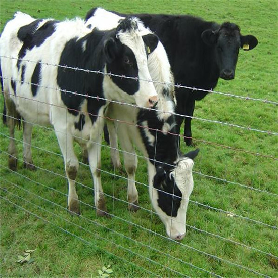100 Factory Supply 2015 New Products Cow Fence Mesh