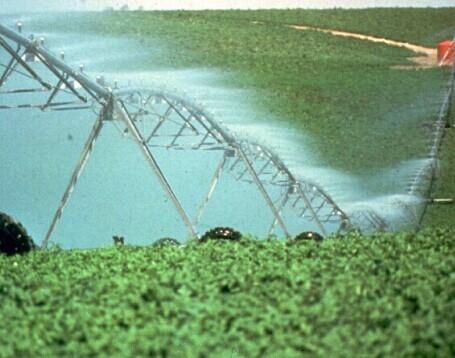 Alfalfa Farmland Center Pivot Irrigation System Large