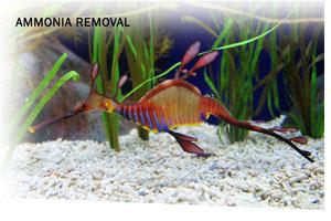Ammosorb Eco Aquarium Ammonia Removal Deco Rocks 2 Lb
