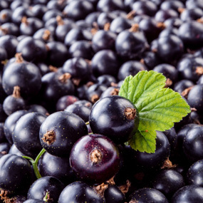 Black Currant Extract Anthocyanidin 25