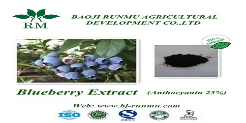 Blueberry Extract Anthocyanidins25 Super Antioxidant