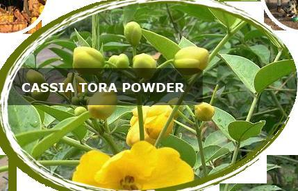 Cassia Tora Seed From Agro Gums
