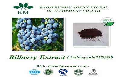 China Bilberry Extract Anthocyanidin 25
