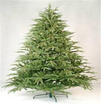 Christmas Tree Xrg070mpex1795c