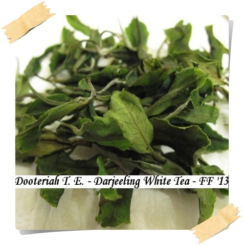 Darjeeling White Tea Dooteriah Estate