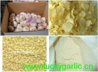 Dehydrated Garlic Granules Flakes Powder