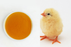 Feed Grade Lutein For Poultry And Fish