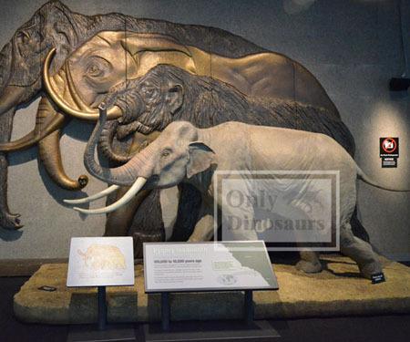 Fiberglass Animal Elephant Model