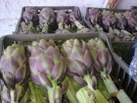 Fresh Artichoke With High Quality