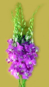 Fresh Cut Orchids Flower Wholesale Dendrobium Queen Pink