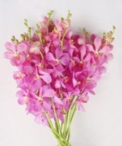 Fresh Cut Orchids Flower Wholesale Mokara Jub Kuan