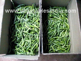 Fresh Vegetable Green Chilly