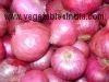 Fresh Vegetable Onion
