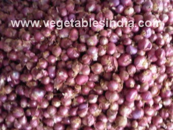 Fresh Vegetable Small Onion